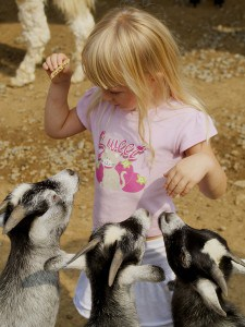 Gilroy Garden Petting Zoo