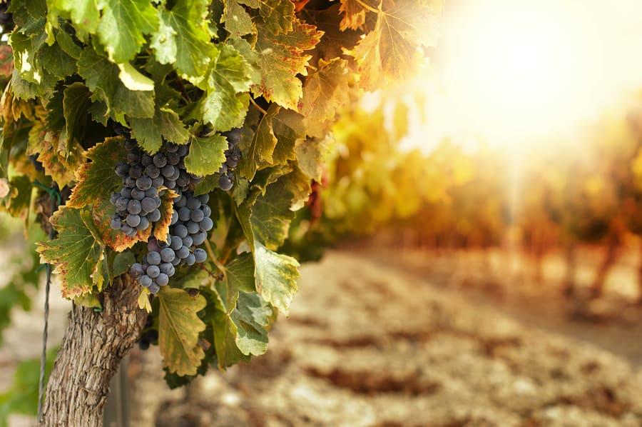 Visit The Wineries Of Santa Clara Valley Fall Passport 2014